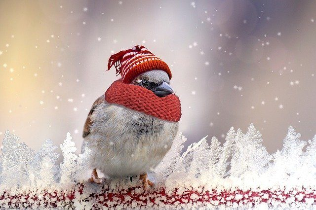 Cold MN Winters - Bird in a hat