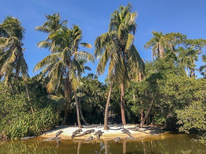 Naples Zoo Alligators