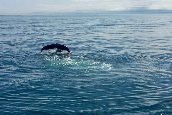Whale Watching - 10 things to do before you die