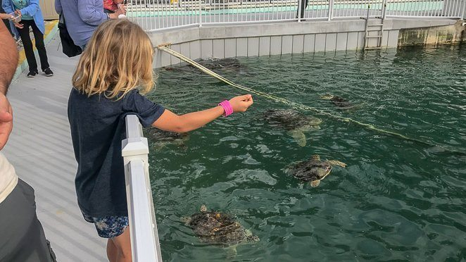 Feed the Sea Turtles at the Turtle Hospital