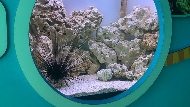 Key West Kids Activities - Discovery Center