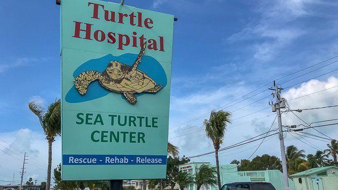 Things to do in Marathon FL - Visit the turtle hospital