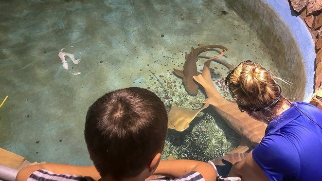 What to do in Key West with kids - Key West Aquarium_