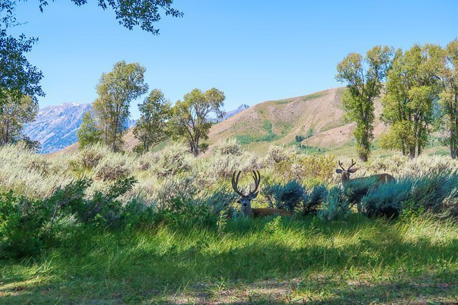See Wildlife in Grand Teton NP