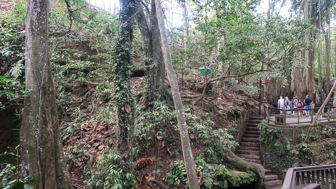 Monkey Forest Jungle
