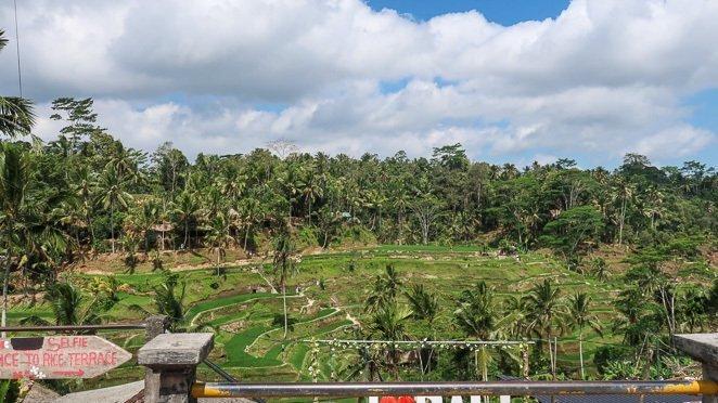Rice Terrances Bali