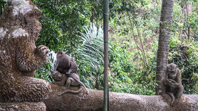 Visit the Monkey Forest Bali